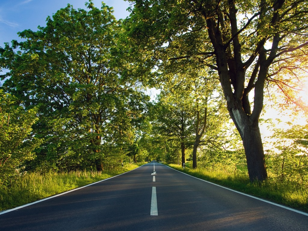 road-asphalt-marking-summer-sunlight-trees