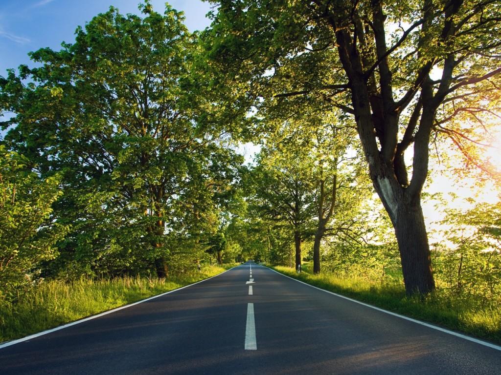 road-asphalt-marking-summer-sunlight-trees